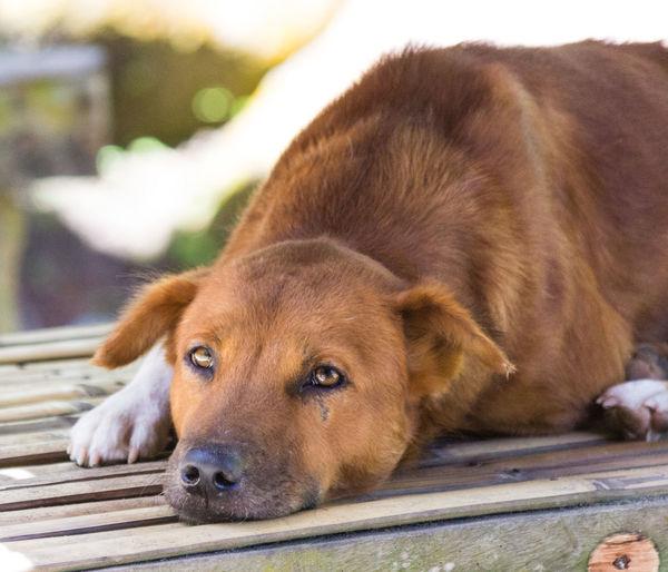 Animal Themes Close-up Day Dog Mammal Nature No People Outdoors