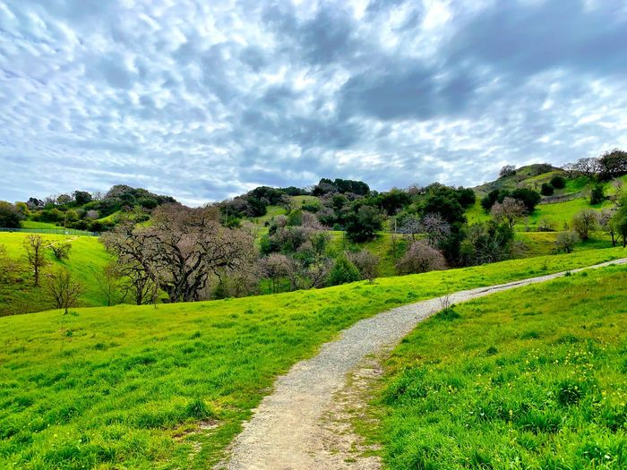 """The Green Hills Of California"" In summer they are the 'Golden Hills Of California' but Winter and Spring find glorious shades of green wherever one looks with sprinkles of yellow mustard in the mix. Spring Is Coming  California Greenery Path Clouds And Sky Clouds Cloud - Sky Sky Beauty In Nature Growth Nature Green Color No People Tranquility Grass Scenics - Nature Landscape"