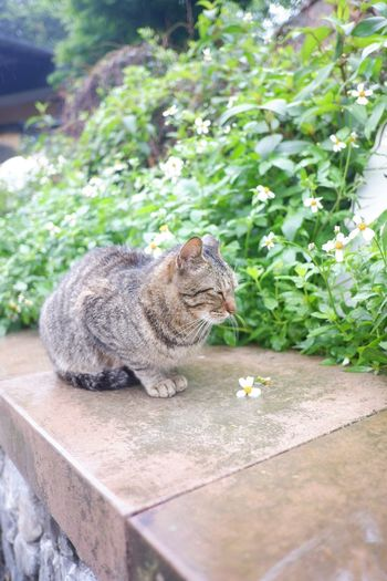 Lovely cat Travel Cat Village Taiwan Aroundtheworld Animal Themes One Animal Animal Animal Wildlife Animals In The Wild Vertebrate Plant Mammal Day No People Nature Sunlight Outdoors Cat Green Color Pets
