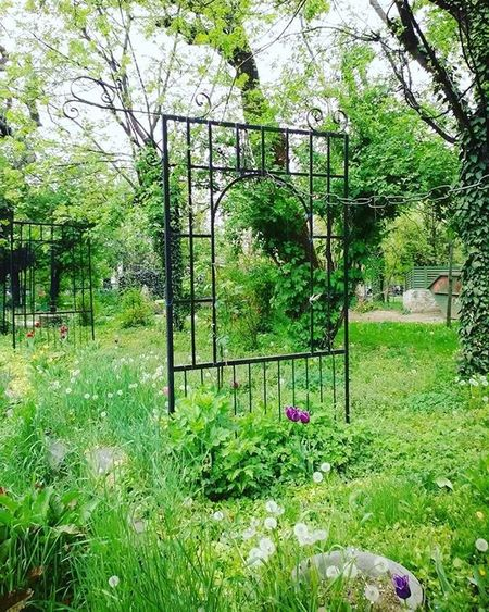 A place to contemplate loosing the noisy self into the silence of Consciousness GODMode Quantum Awareness Shift Share Pray Benice Kindness Love Instagood Instadaily Nature Amazing Goodvibes Peace Beautiful Bliss Awe Vibes Green Garden Park Naturelovers Flower