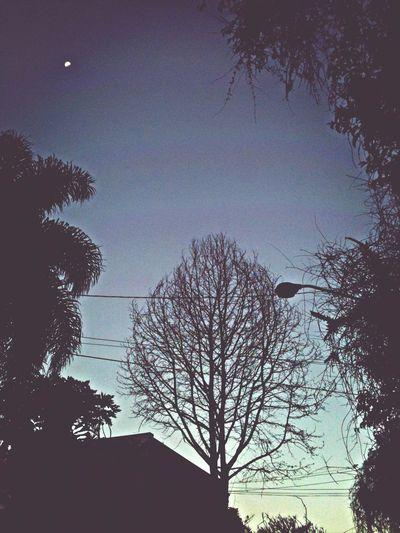 Creepy Moon Trees Winter