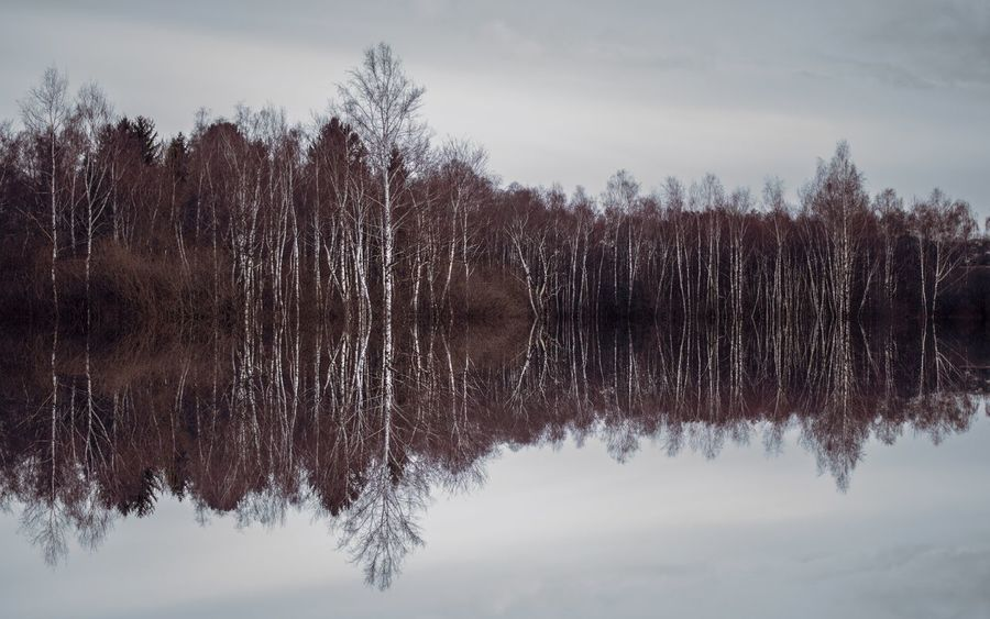 Birch Birch Tree Birch Trees Day Forest Nature Reflection Scenics Tranquility Tree Shades Of Winter