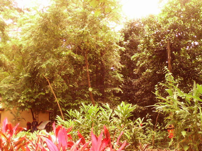 Flowers,Plants & Garden @pure Nature Collection The Calmness Within