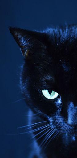 Black Cat Whiskers Animal Themes Black Panther Cat Bombay Cat Close-up Domestic Cat Feline One Animal Pet Portrait Pets Portrait Spooky Yellow Eyes