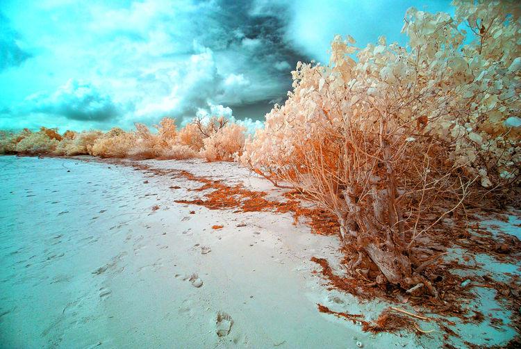 Beauty In Nature Caramoan Caramoan Island Caramoan Island, Camarines Sur CaramoanIslands Close-up Cloud - Sky Day False Color Photography Infrared Infrared Photo Infrared Photography IR Nature No People Outdoors Sky Tree