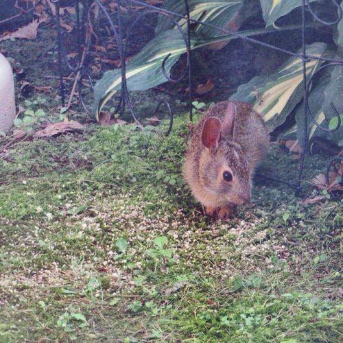 Through the window 😄 Rabbit One Animal Animal Themes Animal Wildlife Nature Outdoors Animals In The Wild