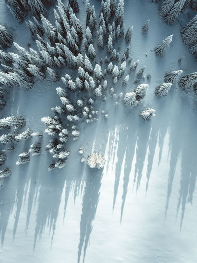 Cold Temperature Winter Beauty In Nature Tranquility Snow Tree Plant Scenics - Nature Tranquil Scene Nature No People Frozen Day Environment Land Idyllic Non-urban Scene Growth Sunlight Outdoors Coniferous Tree Shadow Shadows & Lights Aerial View Aerial Photography My Best Photo