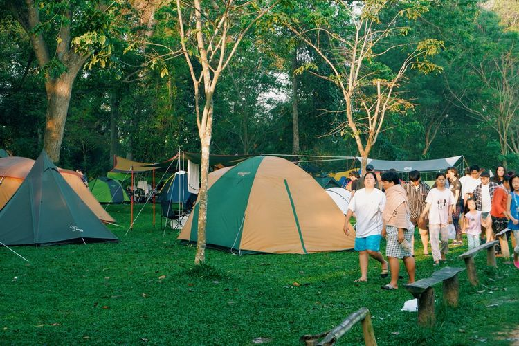 Panoramic view of tent on field against trees