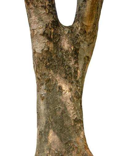 Trunk Bark