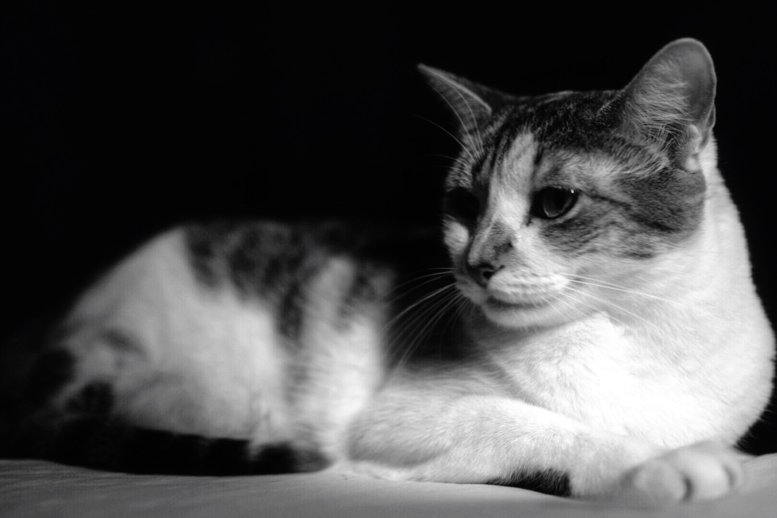 pets, domestic cat, one animal, domestic animals, animal themes, cat, mammal, indoors, feline, whisker, relaxation, close-up, animal head, lying down, portrait, resting, home interior, looking at camera, bed