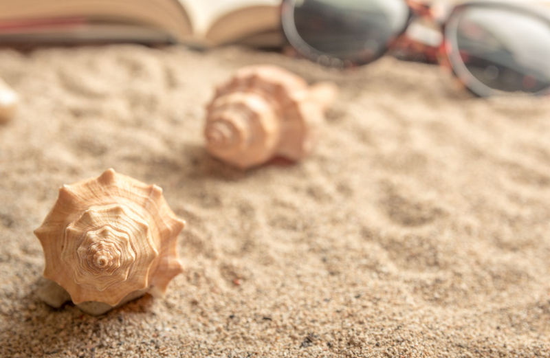 Sea shells on