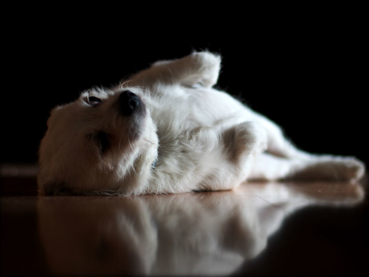 Close-up of dog relaxing on floor at home