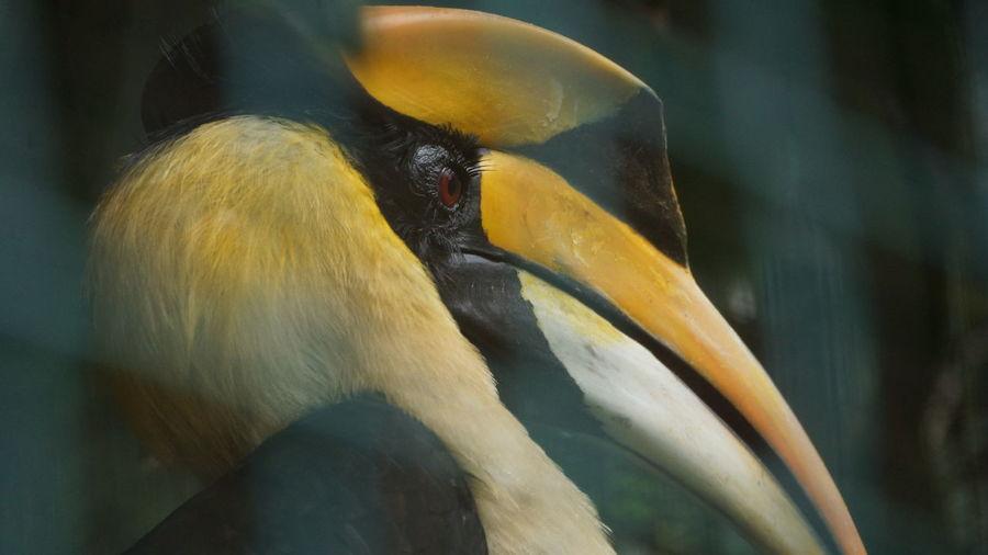 Close-up of hornbill