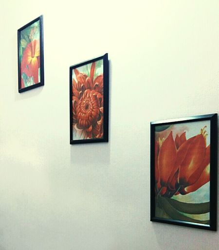 Random Shots Flower Paintings Floral Design Wall Stacks New Photography Noob Photography BABY STEPS