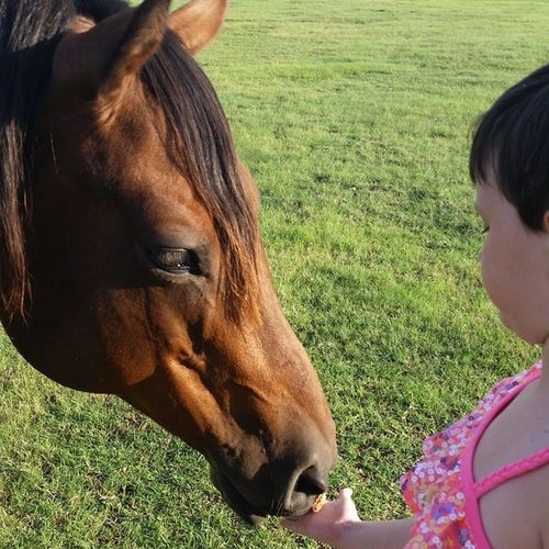 Thelilian feeding Miss Willlow a Snickysnack . Horsehugs Nonisfarm