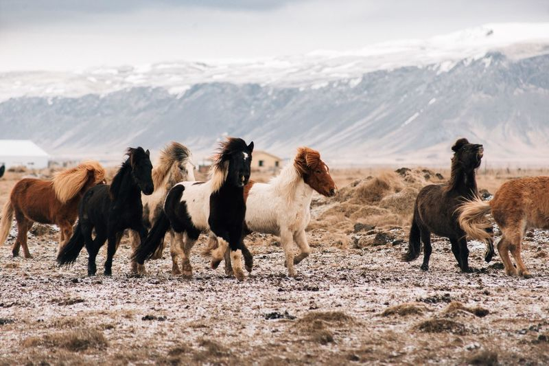 Herd of horses on land during winter