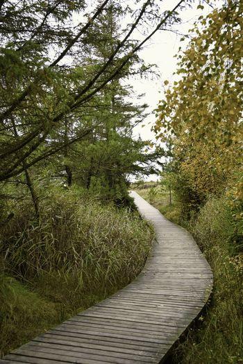 View of boardwalk in forest