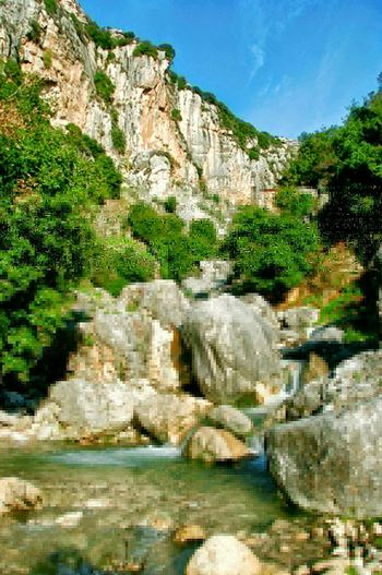 Wild Nature @ Ghalboun-Byblos Courtesy Of Bob Saad