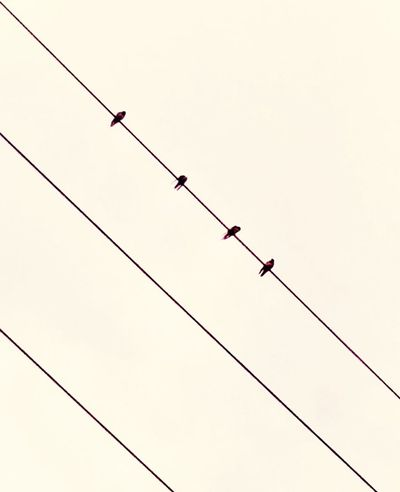Birds & Lines Eyeem Philippines Minimalist Photography