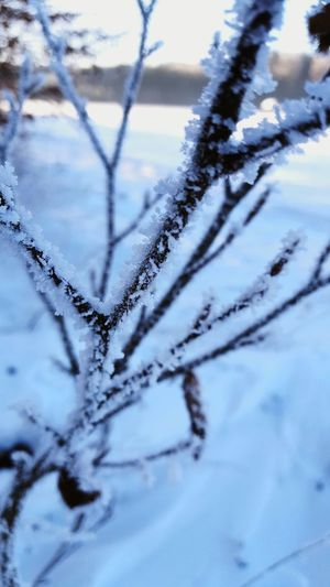 Winter.. Winter Cold Temperature Snow Nature Frost Frozen Blue Weather Close-up Tree No People Ice Beauty In Nature Snowflake Outdoors Ice Crystal Day Sky Schnee Eis Nahaufnahme Outdoor Photography Outdoor Eiskristalle Nature Photography EyeEmNewHere