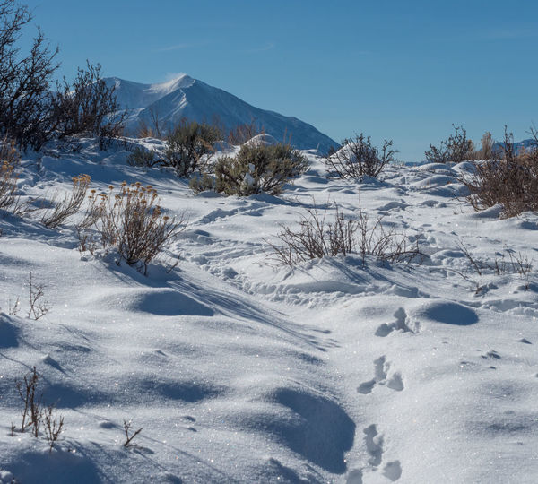 Rabbit tracks in the snow on the hiking trail Hiking Mount Sopris Rabbit Tracks Beauty In Nature Cold Temperature Day Landscape Mountain Mountain Range Nature No People Outdoors Scenics Snow Snowy Tranquil Scene Tranquility White Color Winter