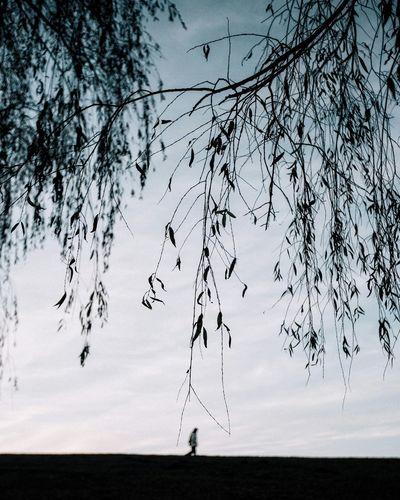Minimalism Nature Tree Sky Beauty In Nature Minimalism Minimalistic