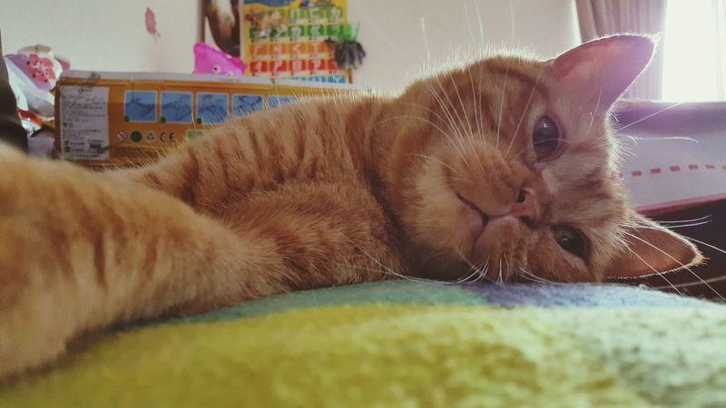 翻轉視界 喵星人 Catboy Wish Focus Day
