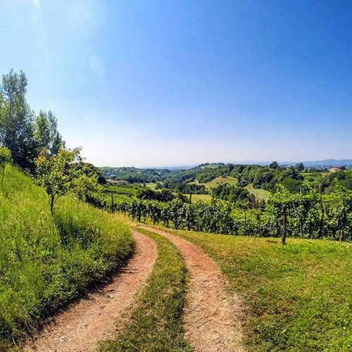 Fara Vicentino, Veneto, Italy Summer Vineyard Veneto Faravicentino Nature Naturelovers Meadow Countryroad Hills Country Hike Wanderlusting Visitveneto Igersveneto Igersvicenza Igveneto Igersitalia Ig_countryside Ig_europe Igworldclub_country Igersoftheday Gopro Goprouniverse Goproeverything Goprolovers goprolife gopro_moments