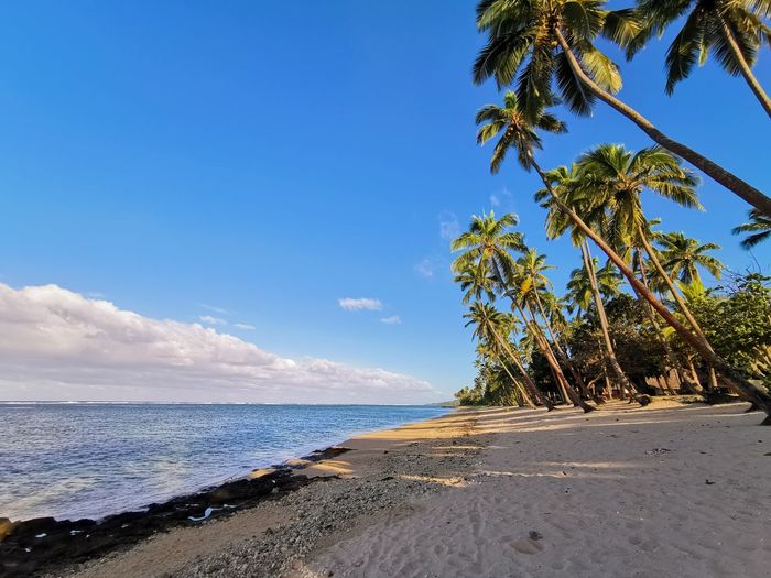 Tropical Tree Water Sea Palm Tree Beach Sand Blue Summer Sky Horizon Over Water Coconut Palm Tree Island