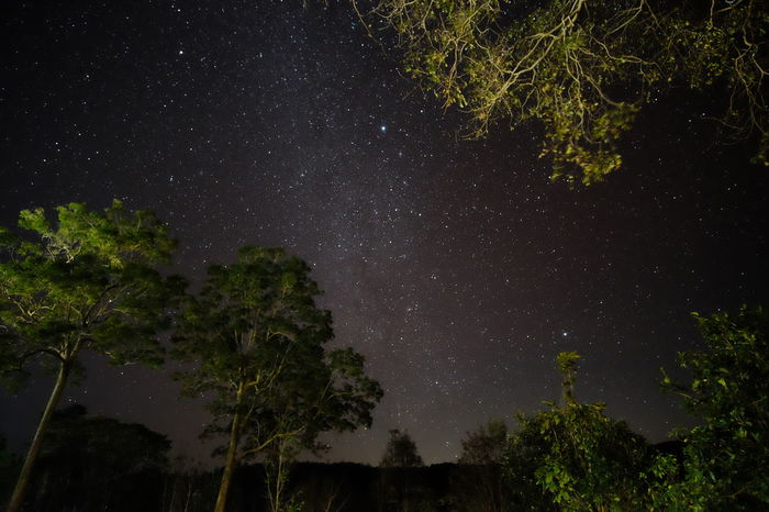 Astronomy Beauty In Nature Forest Landscape Landscape Night Milkyway Night Night Forest Night Lights Night Photography Star Field Tranquil Scene Tranquility Travel Photography