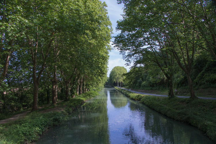 Tree Plant Water Forest Growth Nature Tranquility Reflection No People Scenics - Nature Tranquil Scene Beauty In Nature Land Day Green Color River Non-urban Scene Sky Flowing Water Outdoors Flowing