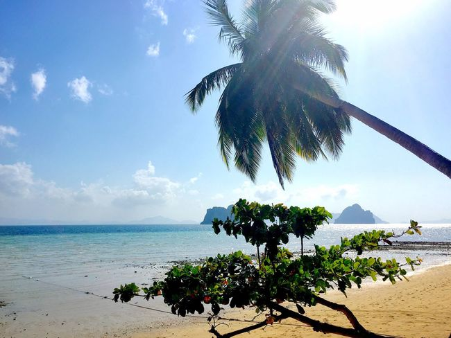 Sea Palm Tree Beach Water Vacations Horizon Over Water Tourism Tranquil Scene Travel Destinations Shore Sand Tree Tourist Tranquility Scenics Beauty In Nature Travel Summer Tropical Climate New Talents Thailand Island Waterfront Nature Miles Away