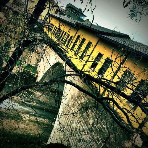 Bursa / Turkey Irgandikoprusu Winter Trees Yellow Wall