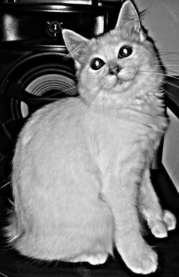 Hermoso Beautiful Kanyn Puertorico Mano ✋ Hand Manosdegato Cathands Angora Angoracat