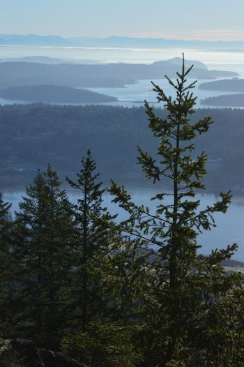 The top of Mount Erie. Tree Green Blue Sky Clouds And Sky PNWonderland PNW No People Island Anacortes Washington State Nature_collection