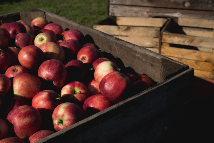 fresh harvested red apples in a wooden box | daylight photography Apple - Fruit Apples Box Container Crate Daylight Daylight Photography Food Freshness Fruit Harvest Healthy Eating Large Group Of Objects Light And Shadow No People Outdoors Red Wood - Material Wooden Box