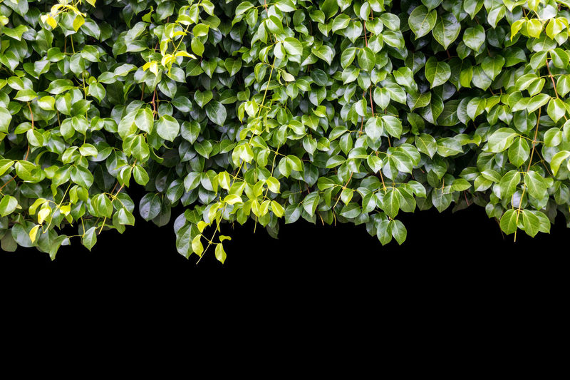 Low angle view of flowering plants against black background