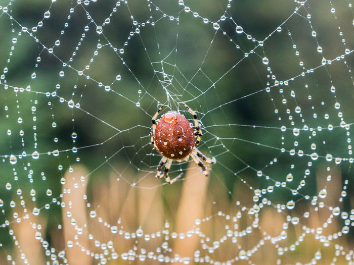 Backgrounds Beauty In Nature Close-up Complexity Day Focus On Foreground Fragility Natural Pattern Nature No People Outdoors Selective Focus Spider Spider Web Web