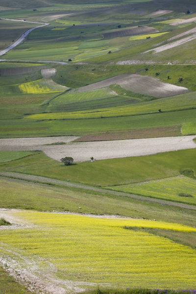 Agriculture Beauty Castelluccio Di Norcia Fieldscape Geometry Green Green Idyllic Italy Landscape No People Norcia Outdoors Relaxing Rural Scene Scenics Tranquil Scene Tranquility Vibrant Color Yellow
