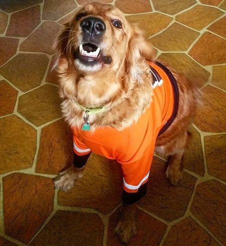 Let's go flyers! Hockey Flyers PhiladelphiaFlyers  Orangeandblack Orangeandtheblack Phillyhockey Preseason Lovemyteam Philadelphiahockey Goldenretrievers Dogslikehockeytoo