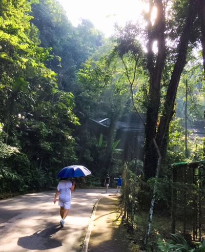 Evening Walk Scenery Scerenity Sunray Walking Real People Rear View Tree One Person Full Length Growth Day Outdoors Nature Lifestyles Adult