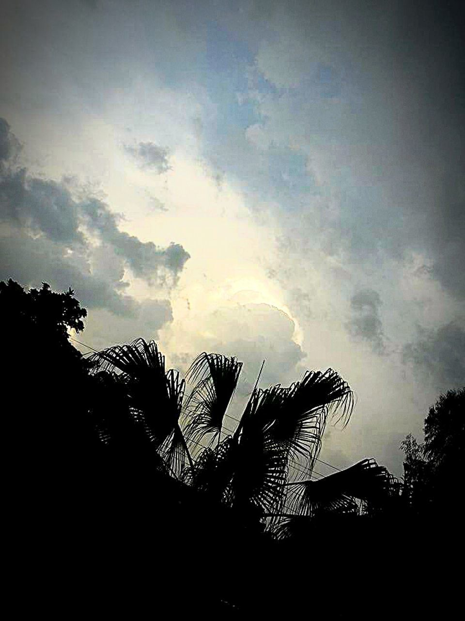 low angle view, silhouette, sky, cloud - sky, nature, no people, tree, outdoors, day, palm tree, beauty in nature