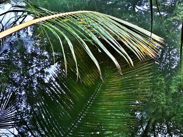 Shadow In The Water Shadow Of Leaves Shadow Of Leaf Coconut Leaves Coconut Leaf Leaf Photography Leaves Photography Leaves Green Color Nature Water Leaf