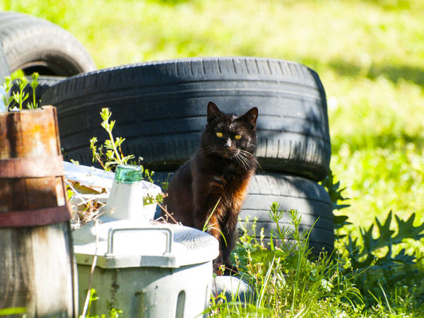 Animal Animal Themes Black Cat Cat Cats Cats Of EyeEm Countryside Countryside Life Day Domestic Animals Domestic Cat Feline Grass Looking At Camera Mammal Nature No People One Animal Outdoors Pets Plant Rural Life Rural Lifestyle Rural Scene Scenery