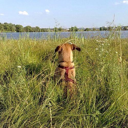Impression Impression Dog Summer
