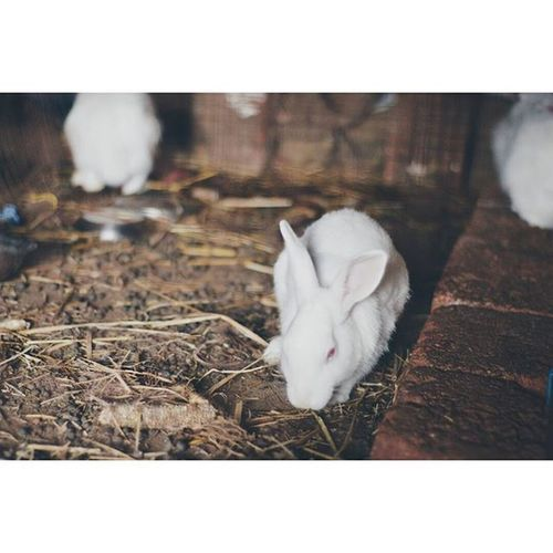 Keep Calm and love Rabbits Location - Naneghat, Pune, India IndiaJourney Rabbits