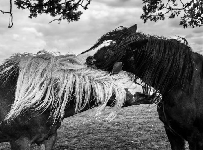 Horse Horses Domestic Animals Animal Themes Animal Hair Field Outdoors Day Sky Standing No People Nature Tree Close-up Love Friend Friendship Black And White No filter EyeEmNewHere Art Is Everywhere EyeEm Diversity