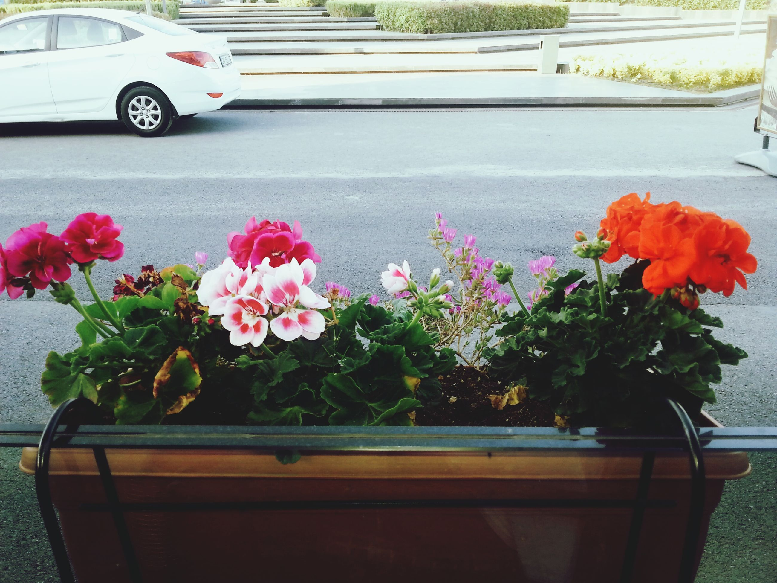 flower, freshness, plant, fragility, growth, potted plant, petal, flower head, beauty in nature, blooming, pink color, nature, flower pot, leaf, front or back yard, in bloom, day, high angle view, outdoors, transportation