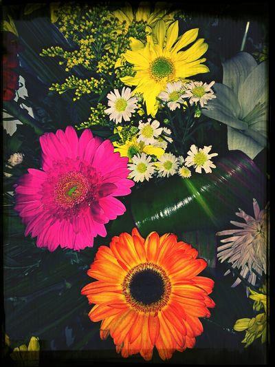 Flowers Flowerporn HDR