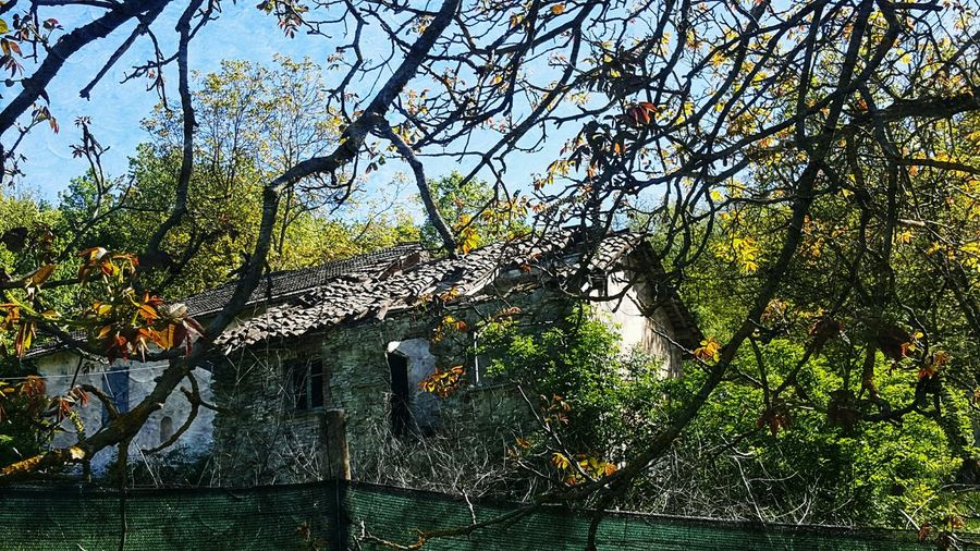 Rustic Rústico  Rustichouse Casarustica Trees Rami Mattoni Alberi Impression Art Getty Images Eyeem Photography Spring Photographs Photography Photo Filters Nature Outdoor Old House EyeEm Gallery Different Filter Photograph
